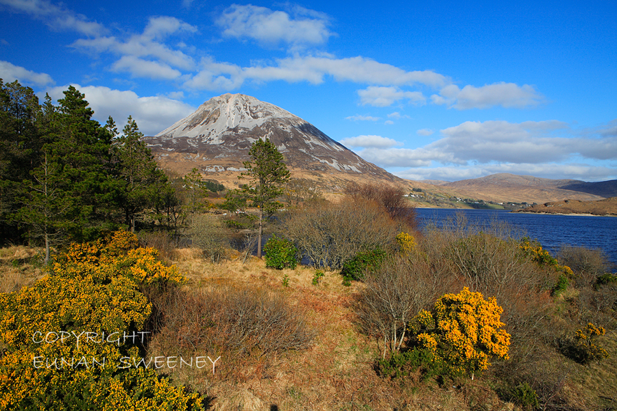 Errigal  Mountain.  Co.  Donegal